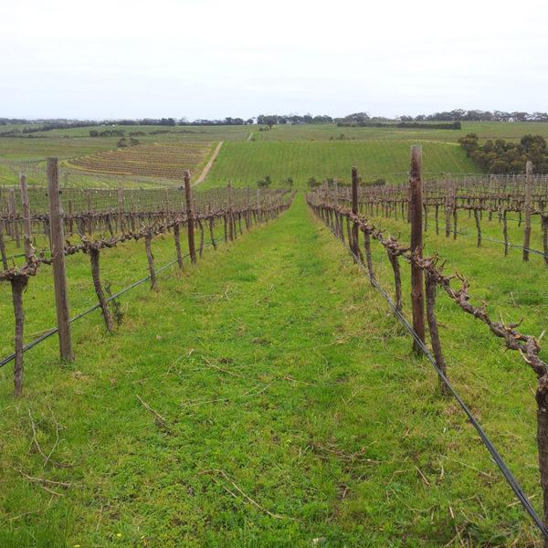 barossa-wines
