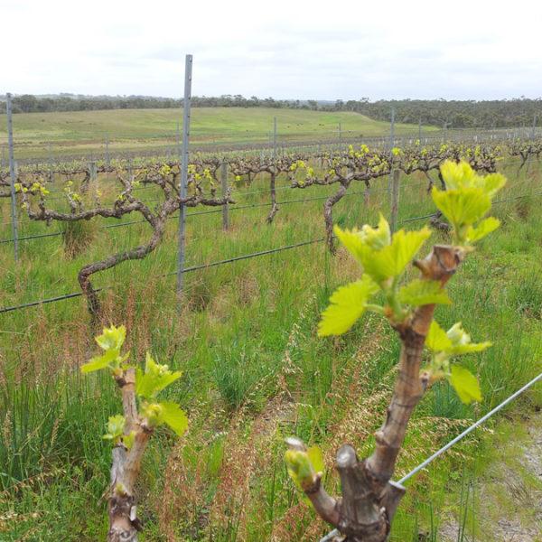 barossa-wines-buy