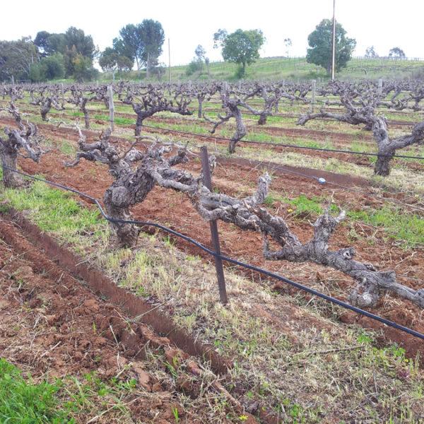 barossa-wines-online